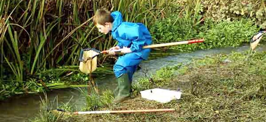 Boy pond dipping