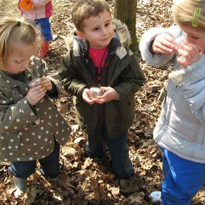 Introduction to Forest School